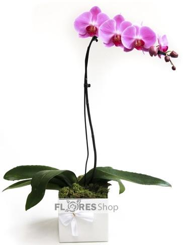 1750 Graça de Orquídea