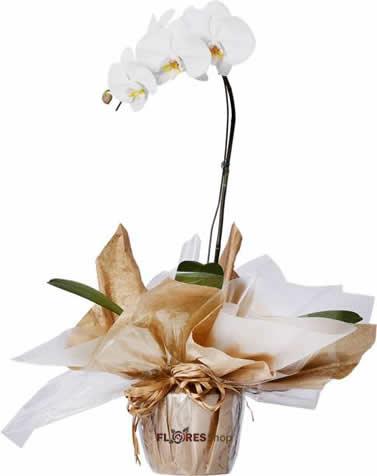 2062 Orquídea Branca