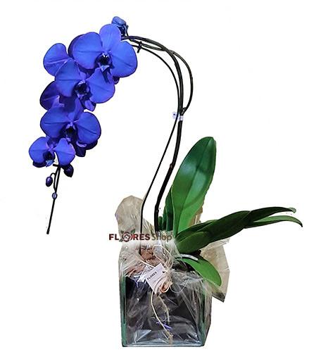 3182 Orquídea Azul
