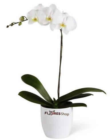 3323 Vaso de Orquídea