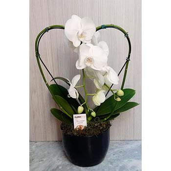4534 Orquídea Coração