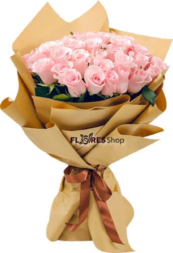 4582 Charme rosa