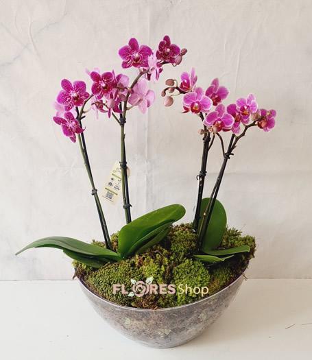 4780 Duo Mini Orquídeas