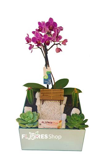 4869 Orquídea com Suculenta