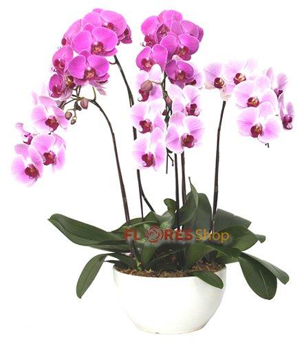 510 Belíssimas Orquídeas