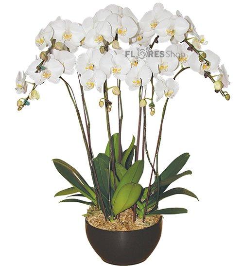 609 Magnificas Orquídeas