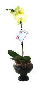 757 Orquídea Pequena