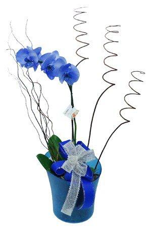 767 Orquídea Azul